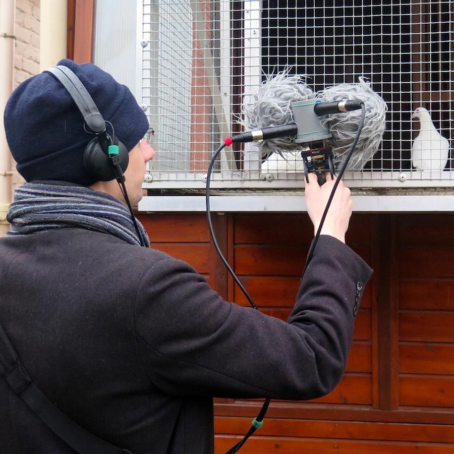 Encouragez les pigeons-athlètes